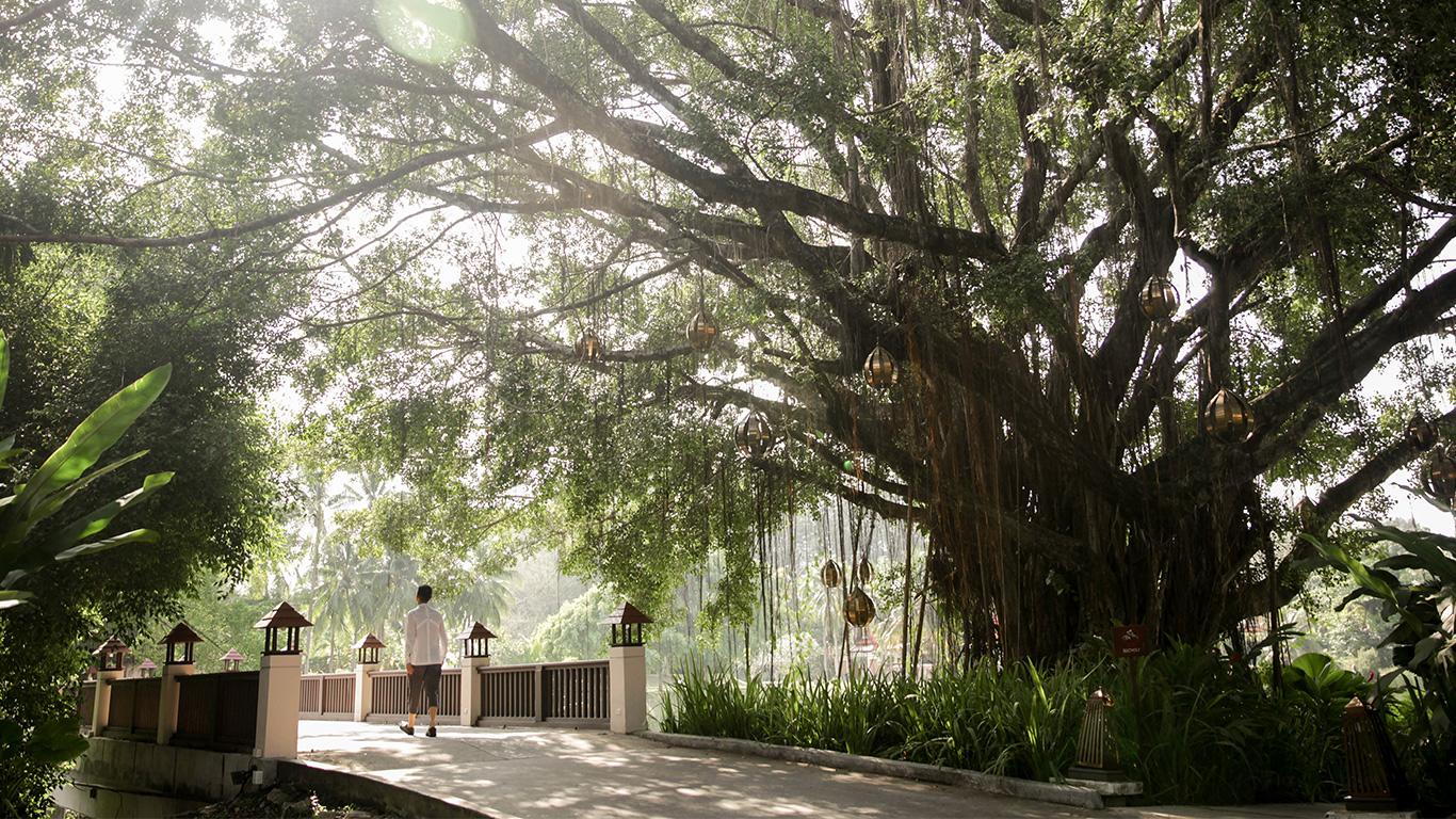 Banyan_tree_phuket_hero